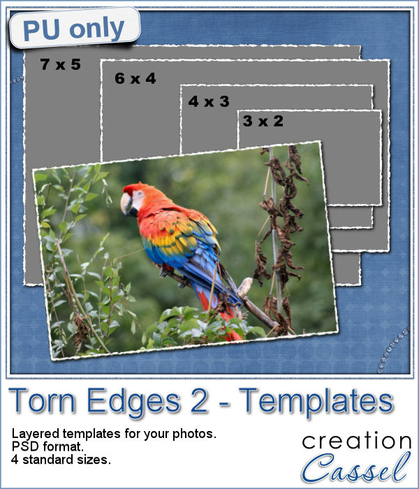 Torn edges layered templates for photo in psd format