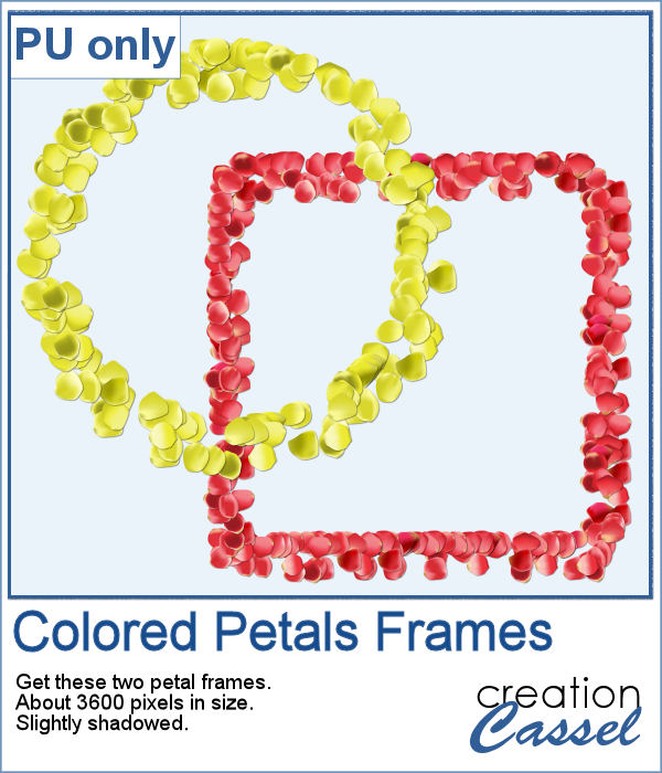 Colored petal frames in PNG format