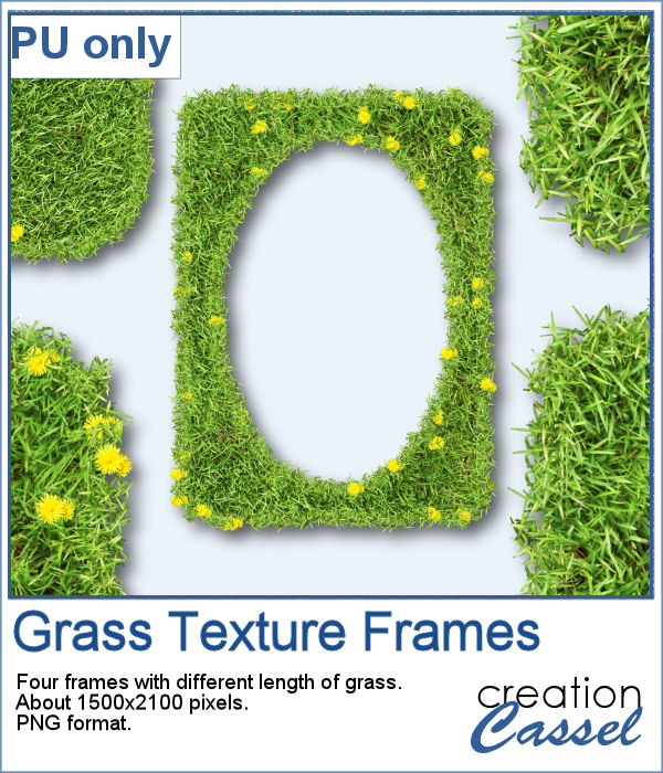 Grass with dandelions frames in PNG format