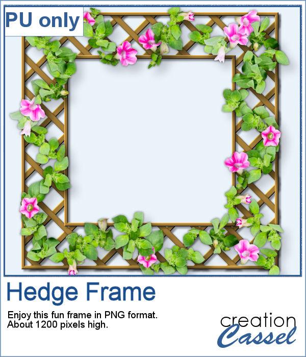 Hedge frame in PNG format