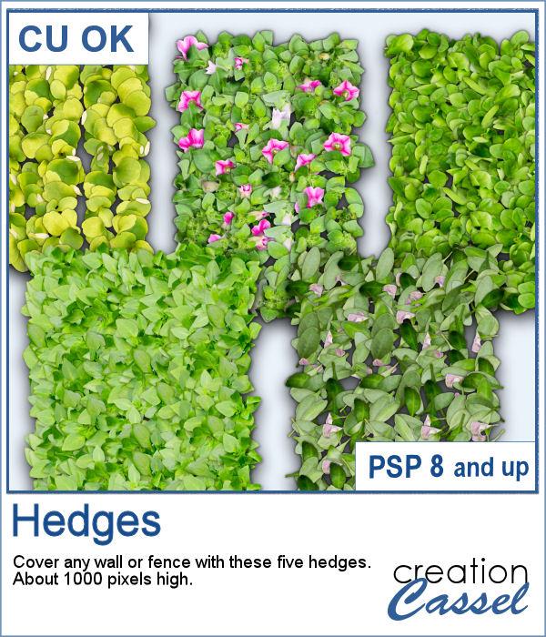 Hedges picture tubes for PaintShop Pro